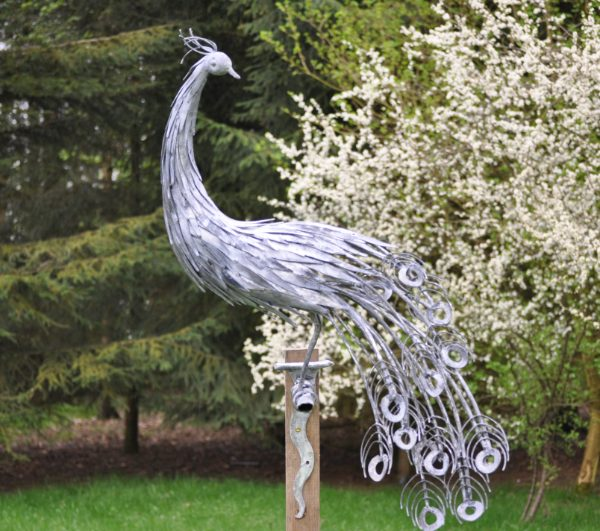 Peacock Garden Sculpture by Ian Gill