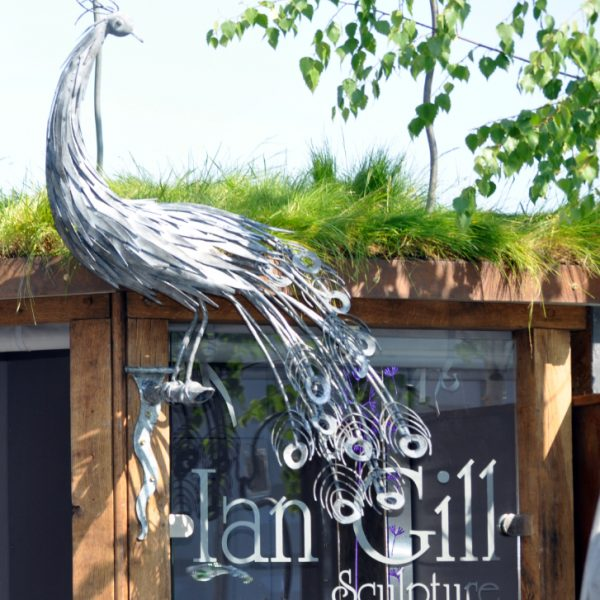 Peacock Sculpture by Ian Gill