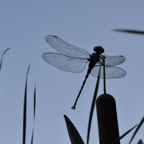 Giant Dragonfly & Bulrush Sculpture