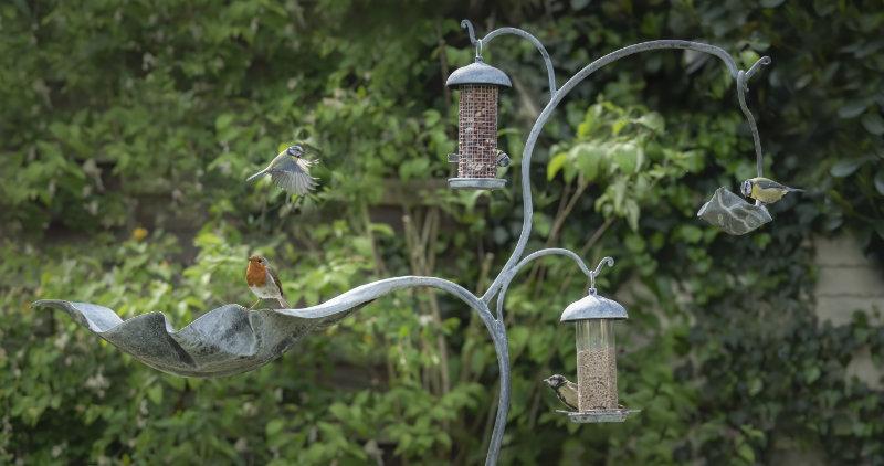 Birds at the Bird Feeder
