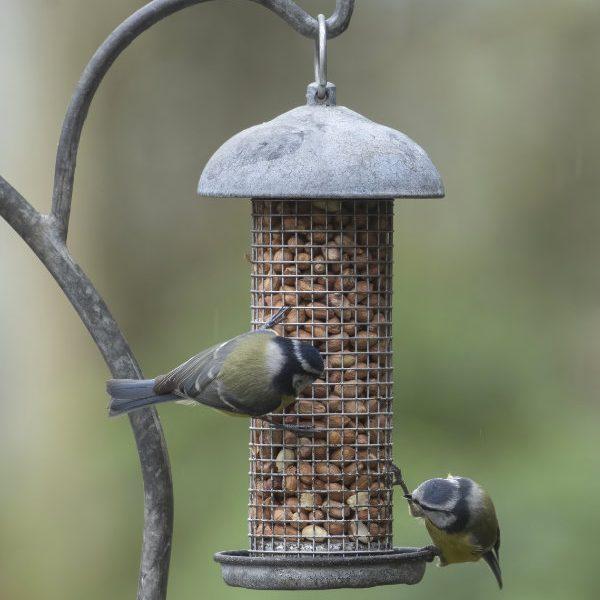 Birds feeding on Bird Feeder